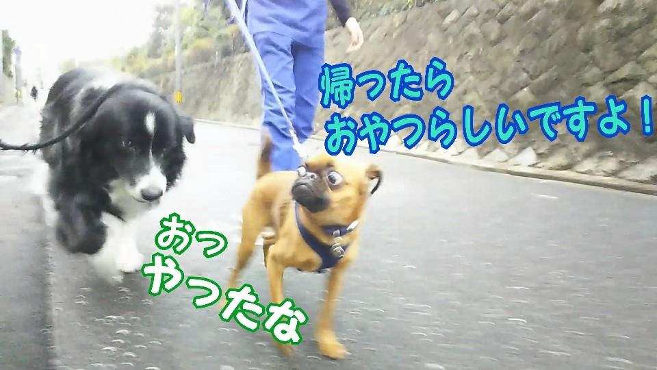 お散歩お散歩♪_f0357682_18071551.jpg