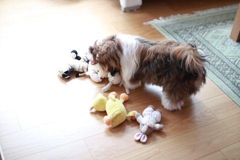 家の子自慢&おもちゃをお洗濯♪_c0090198_17480710.jpg