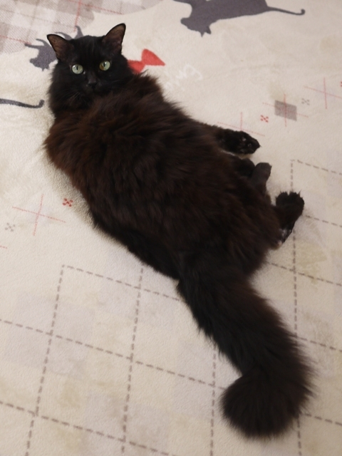 猫のお留守番 モコちゃん編。_a0143140_23021032.jpg