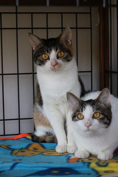 新入りさん達の様子と先住保護猫さん達の様子、里親様便り_e0151545_18505786.jpg