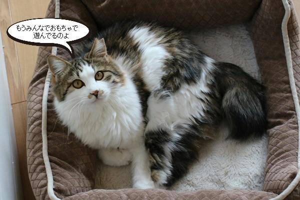 新入りさん達の様子と先住保護猫さん達の様子、里親様便り_e0151545_18510982.jpg