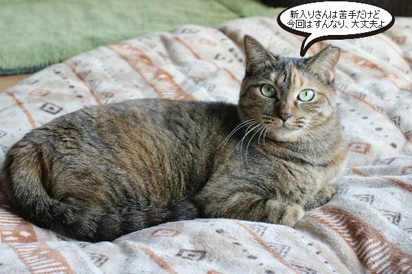 新入りさん達の様子と先住保護猫さん達の様子、里親様便り_e0151545_18511878.jpg