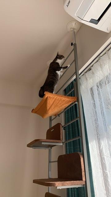 新入りさん達の様子と先住保護猫さん達の様子、里親様便り_e0151545_18512620.jpeg