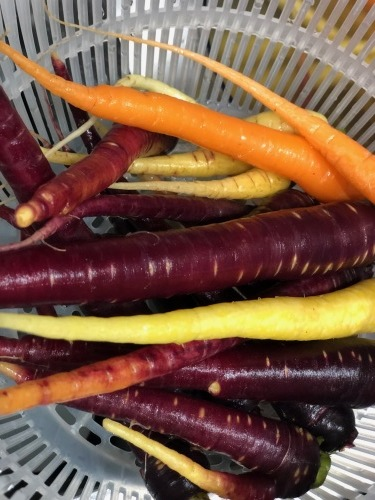 クリスマスが終わりひと段落  しかし野菜達はどんどん成長中・・気温下がってもっともっと美味しくなってきます_c0222448_14102862.jpg