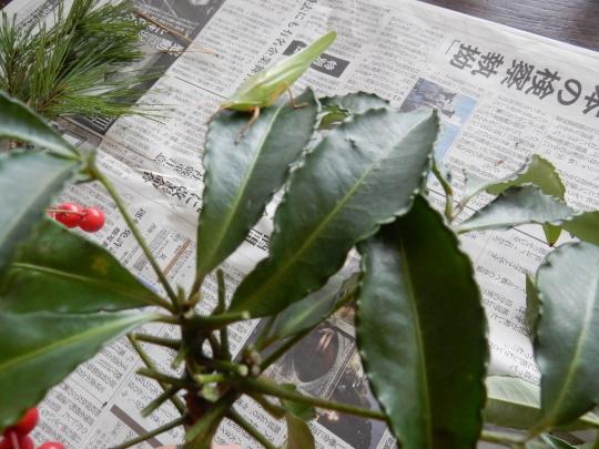 '18,12,27(木)お正月の花活けと頭痛から回復!_f0060461_10505257.jpg