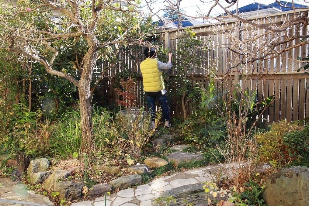 福寿草の芽が出てきたわよ♪^^_a0107574_21165826.jpg