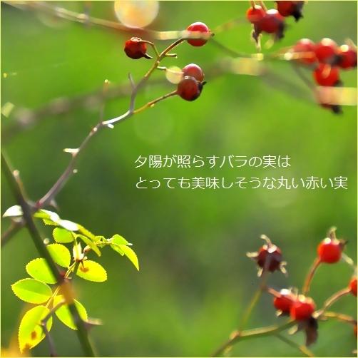 b0154475_22492506.jpg