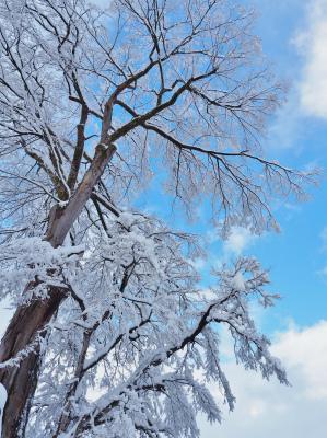 雪の境内へ行ってみました_c0336902_18045581.jpg