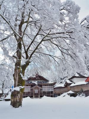 雪の境内へ行ってみました_c0336902_18045982.jpg