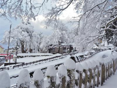 雪の境内へ行ってみました_c0336902_18051112.jpg