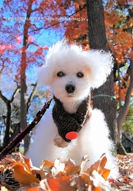 冬将軍到来!_d0083623_15533869.jpg