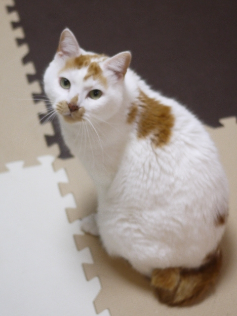 猫のお留守番 咲くん編。_a0143140_19010040.jpg