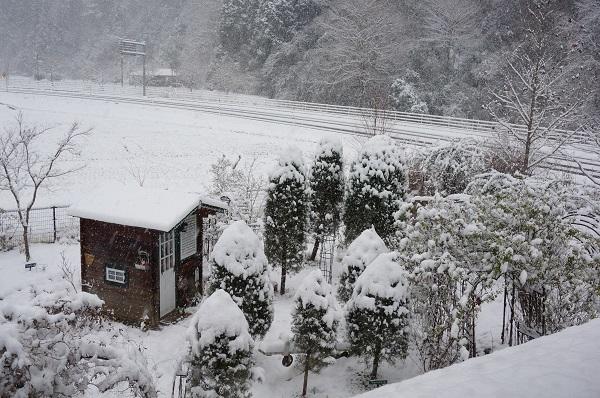 雪が、雪が、_e0365880_21523334.jpg