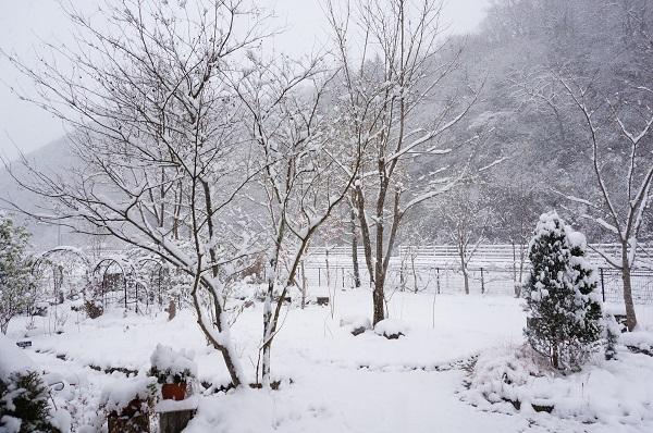 雪が、雪が、_e0365880_21531335.jpg