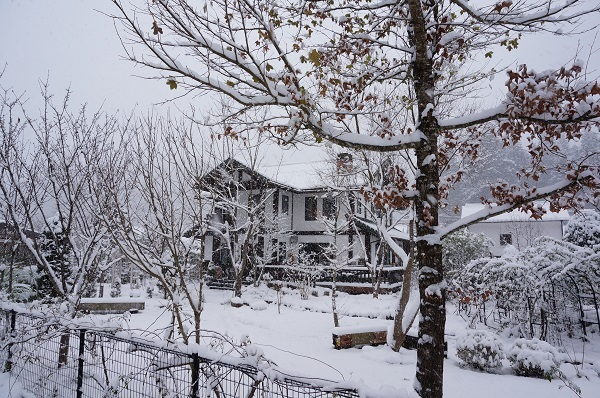 雪が、雪が、_e0365880_21532526.jpg