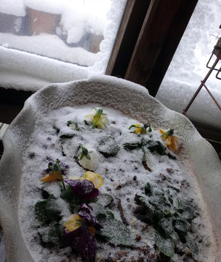 吹雪の朝のミャンハウス、中のスミレちゃん、カチンコチン♪_a0136293_16054121.jpg