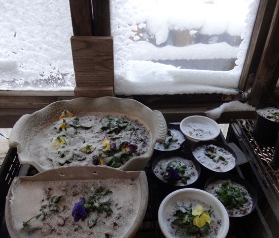 吹雪の朝のミャンハウス、中のスミレちゃん、カチンコチン♪_a0136293_16105441.jpg