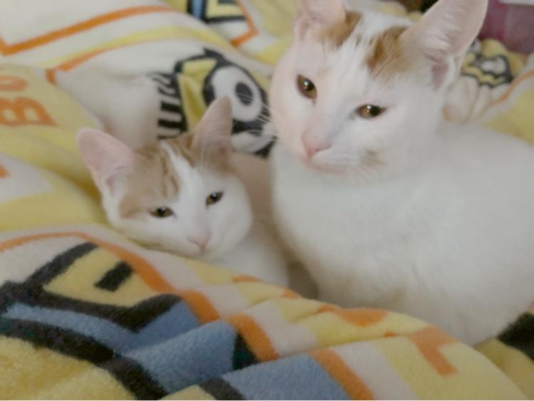 猫年_d0233224_23205985.jpg
