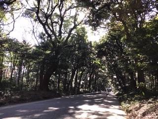 「師走の明治神宮」_b0211926_20352318.jpg