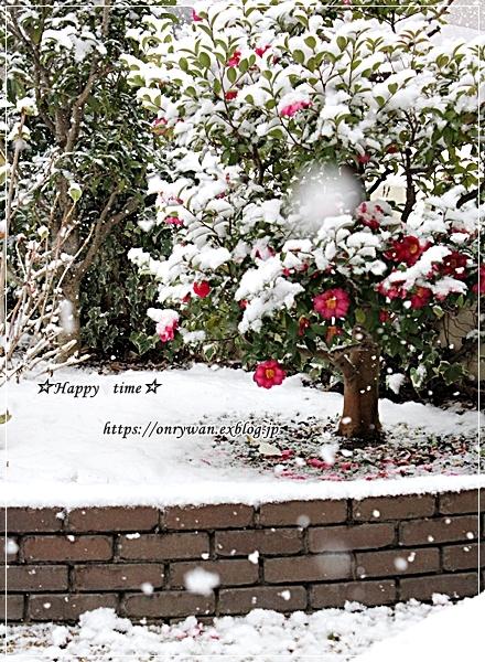 今季初雪とお弁当日記まとめ9月~11月♪_f0348032_17591064.jpg