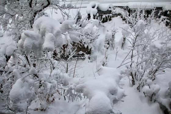 雪_b0132338_08254667.jpeg