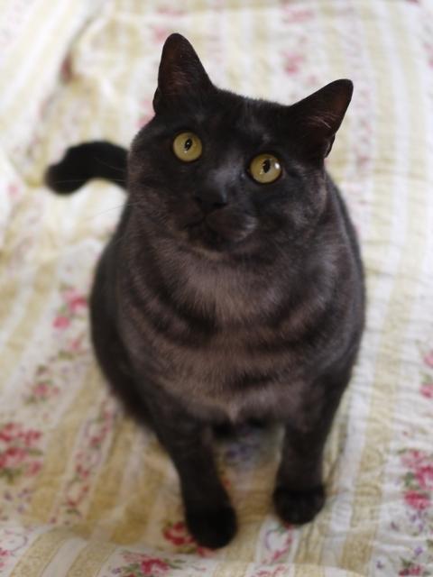 猫のお留守番 若くん編。_a0143140_22532014.jpg