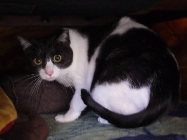 猫のお留守番 姫ちゃん編。_a0143140_22550798.jpg