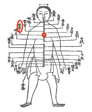 ストレスを感じやすい人は、◯骨をゆるめましょう 〜ある日の施術より〜_e0073240_05352566.jpg