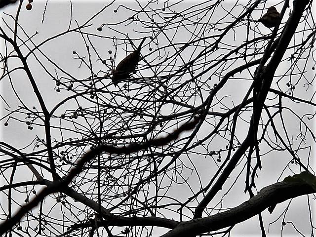 藤田八束の鳥達大好き日記@小鳥が大好き、鳥の魅力、小鳥たちと日本の情景・・・小鳥たちと植物たちの素敵なコラボ写真_d0181492_11461945.jpg