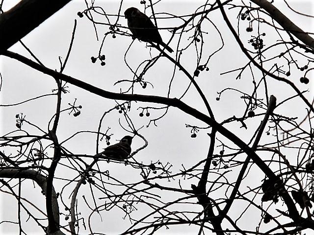 藤田八束の鳥達大好き日記@小鳥が大好き、鳥の魅力、小鳥たちと日本の情景・・・小鳥たちと植物たちの素敵なコラボ写真_d0181492_11463159.jpg