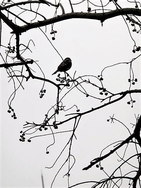 藤田八束の鳥達大好き日記@小鳥が大好き、鳥の魅力、小鳥たちと日本の情景・・・小鳥たちと植物たちの素敵なコラボ写真_d0181492_11471459.jpg