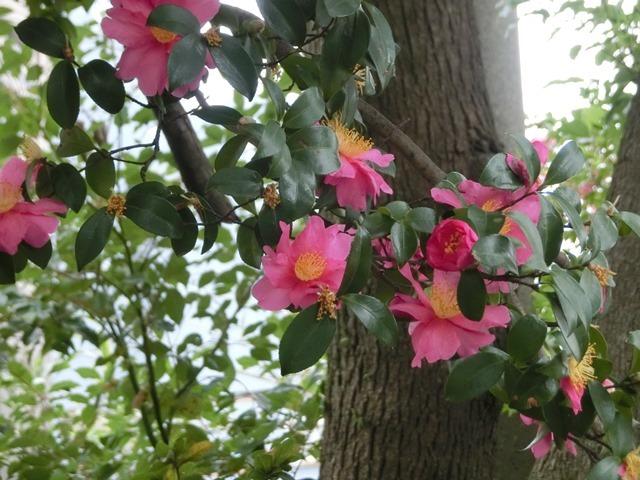 藤田八束の鳥達大好き日記@小鳥が大好き、鳥の魅力、小鳥たちと日本の情景・・・小鳥たちと植物たちの素敵なコラボ写真_d0181492_11475701.jpg