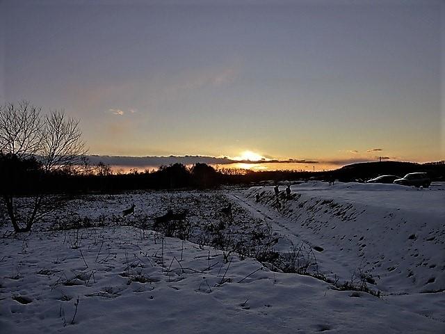 藤田八束の鉄道写真@北海道で出会った極寒の中の鹿たち、夕日に群れる鹿の群れ、北海道の列車達_d0181492_23175004.jpg
