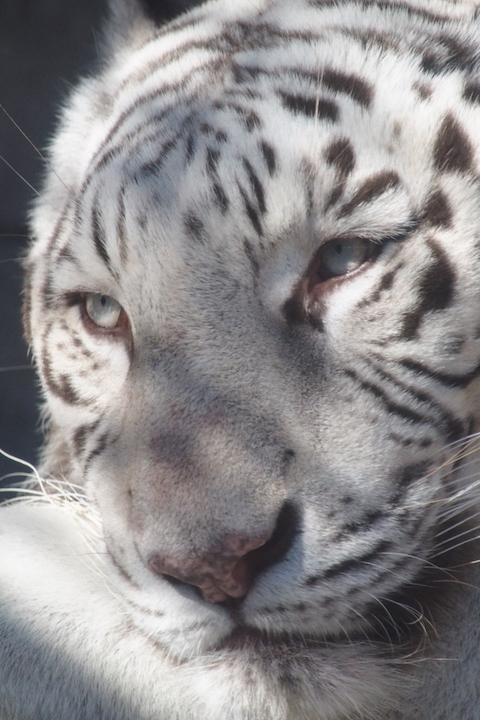 動物園撮り納め_b0016600_2274955.jpg