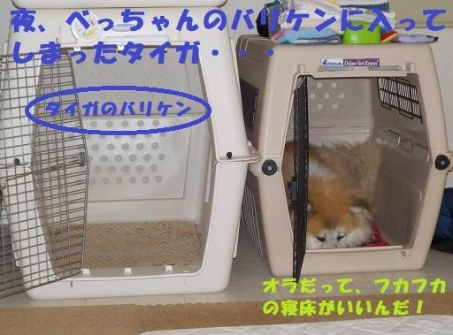 f0121712_23230432.jpg