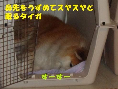 f0121712_23501572.jpg