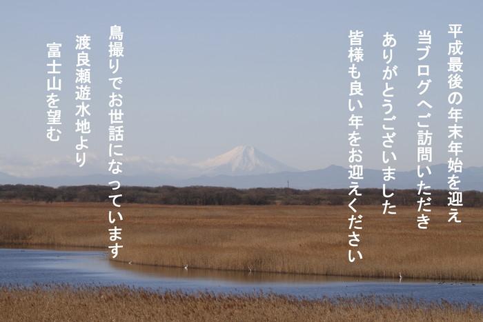 冬鳥を探しに出かけアトリに逢う(渡良瀬遊水地内にて)_f0239515_2218713.jpg
