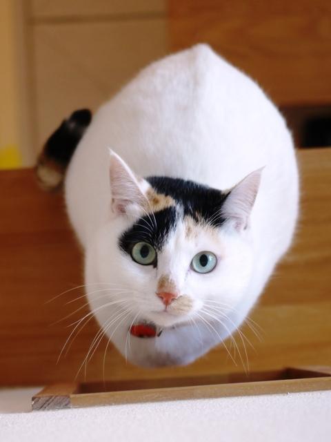 猫のお留守番 サクラちゃん編。_a0143140_22513788.jpg