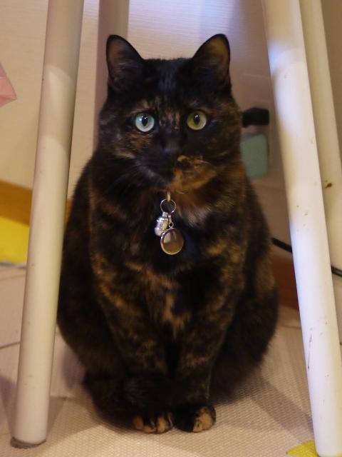 猫のお留守番 ユリちゃん編。_a0143140_22541979.jpg