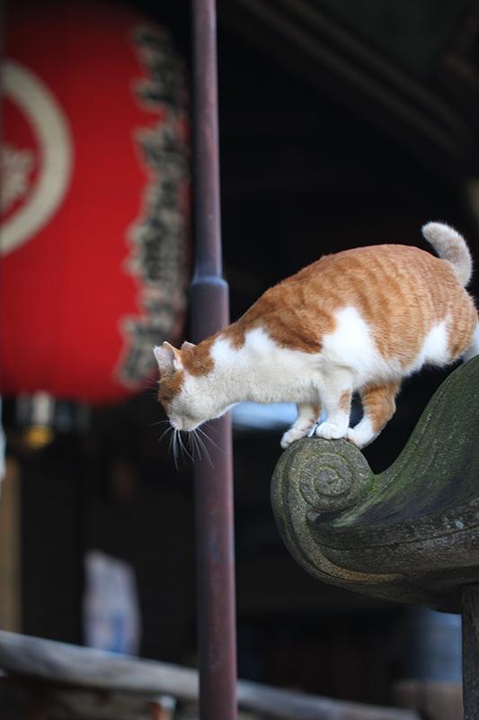 京都市中京区_b0186148_15544842.jpg