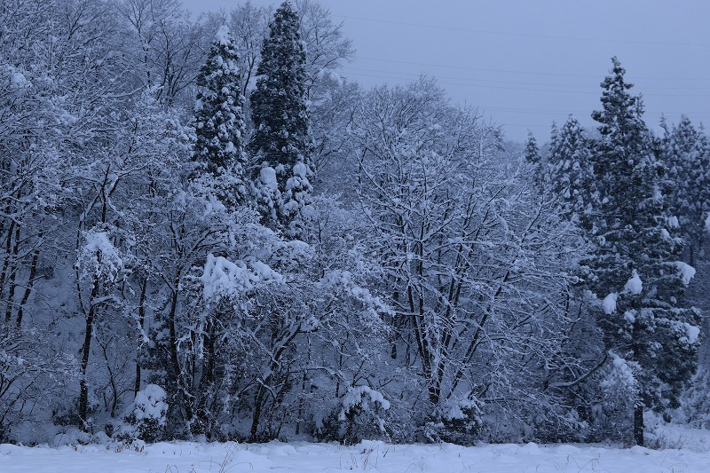 冬景色_c0155950_00114617.jpg