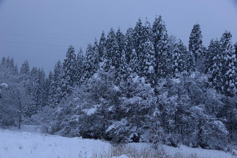 冬景色_c0155950_00120548.jpg