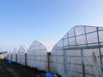夢スイカ 平成31年3月下旬の収穫へ向け小玉スイカ『ひとりじめHM』の定植後の様子を現地取材_a0254656_16370666.jpg