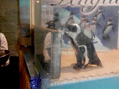 ペンギンはいた_a0001971_22552302.jpg