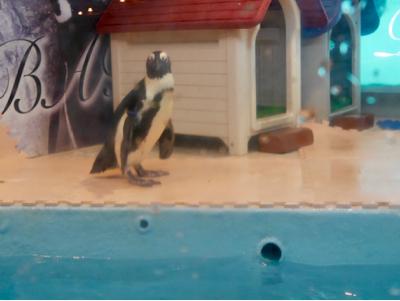 ペンギンはいた_a0001971_22553976.jpg