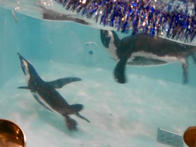ペンギンはいた_a0001971_23085505.jpg