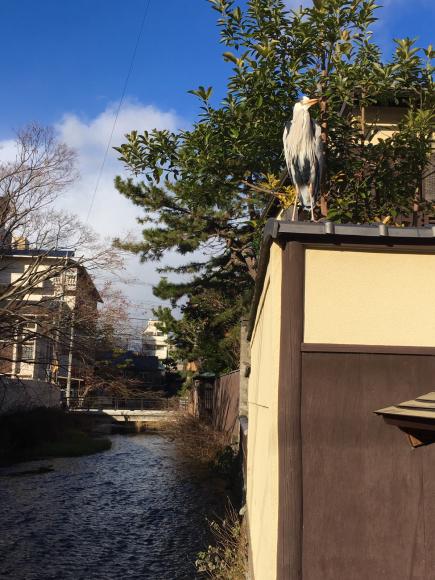祇園(京都市)_d0339676_17151461.jpg