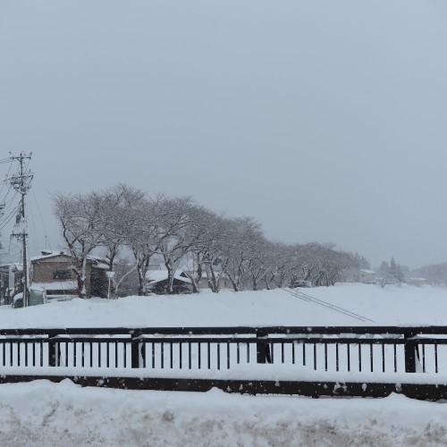 朝の散歩、2018.12.31_c0075701_12493532.jpg