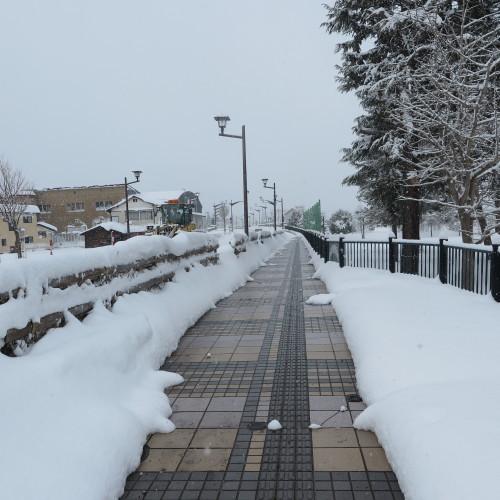 朝の散歩、2018.12.31_c0075701_12522371.jpg