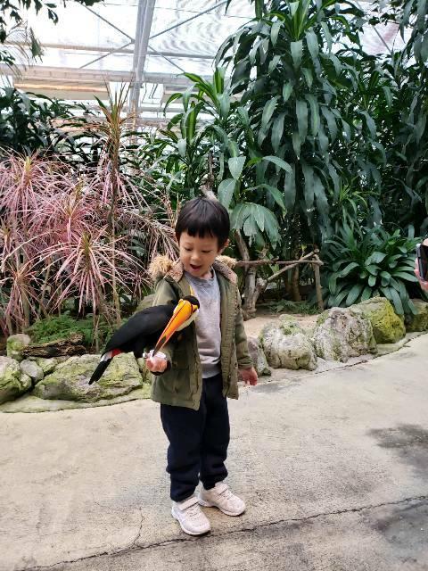 🐤『松江フォーゲルパーク』ペンギンの散歩 🐧🐧🐧 にフクロウショー 🐦 綺麗な花々と一緒 🌝_f0061067_2140154.jpg